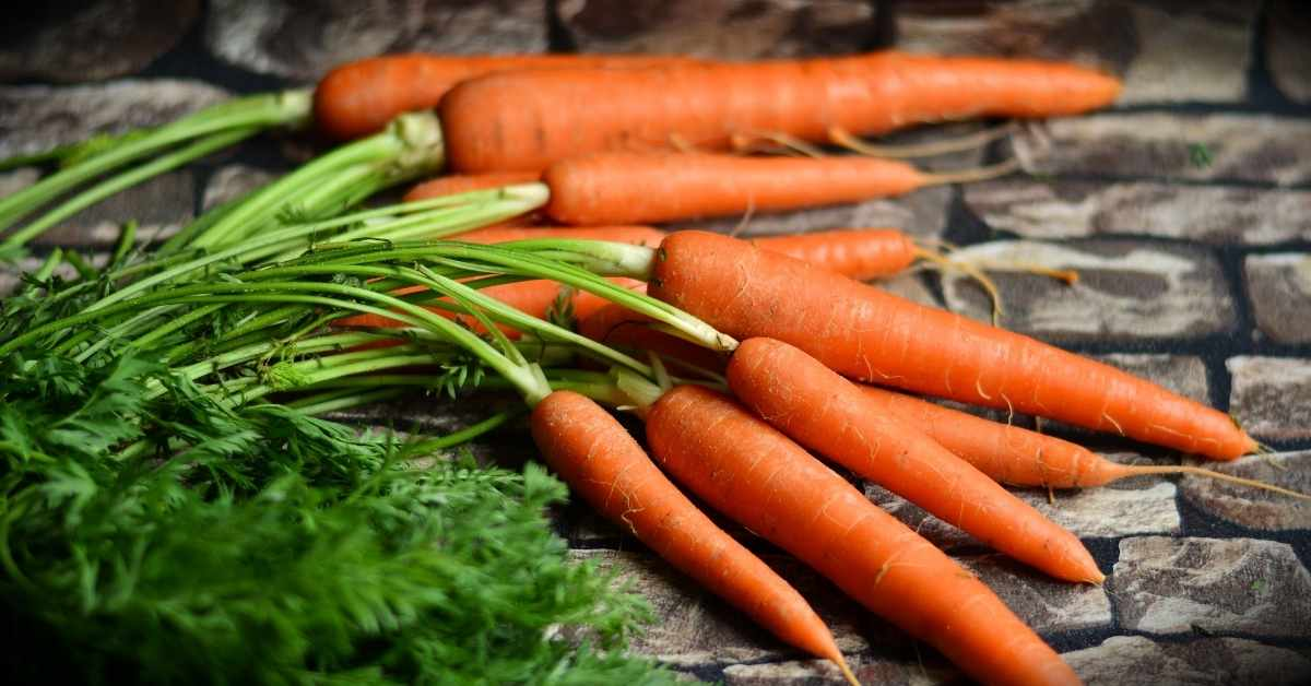 carrots for juicing
