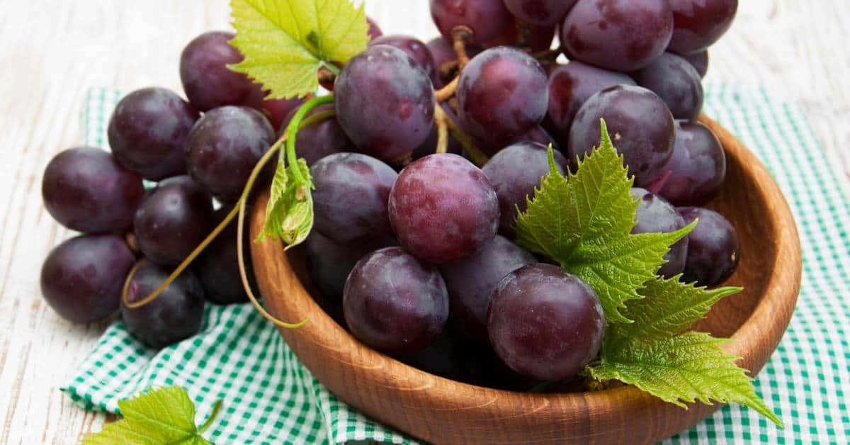 grapes for juicing